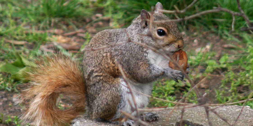 Squirrels digging in garden squirrel problems - How to keep squirrels from digging in garden ...
