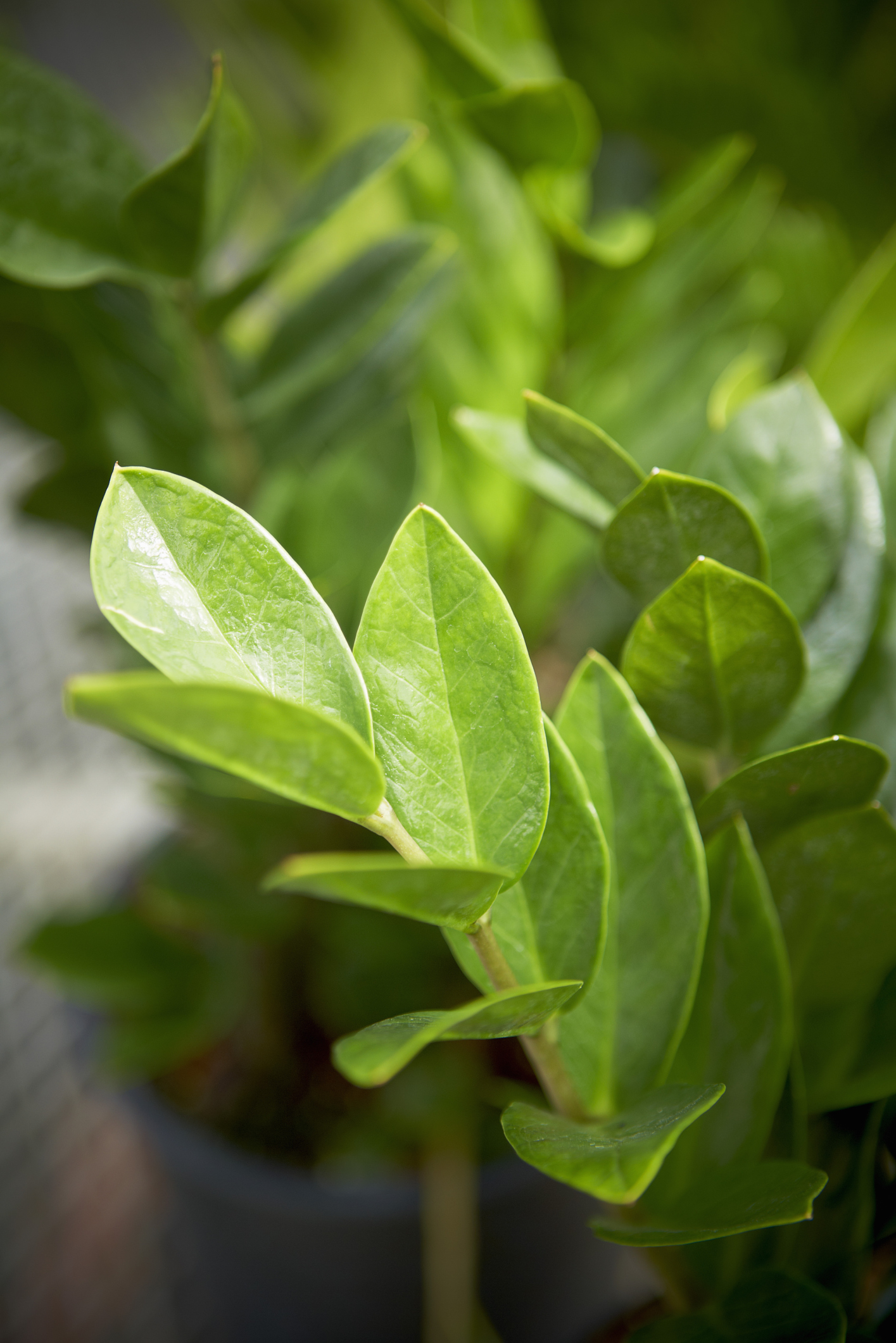 Houseplants That Don T Need Much Water Hard To Kill