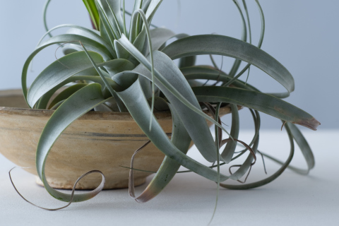 Houseplants that don 39 t need much water hard to kill houseplants - Plants that dont need soil natures wonders ...