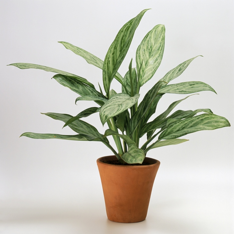 How To Green Your Home houseplants that don't need much water - hard to kill houseplants