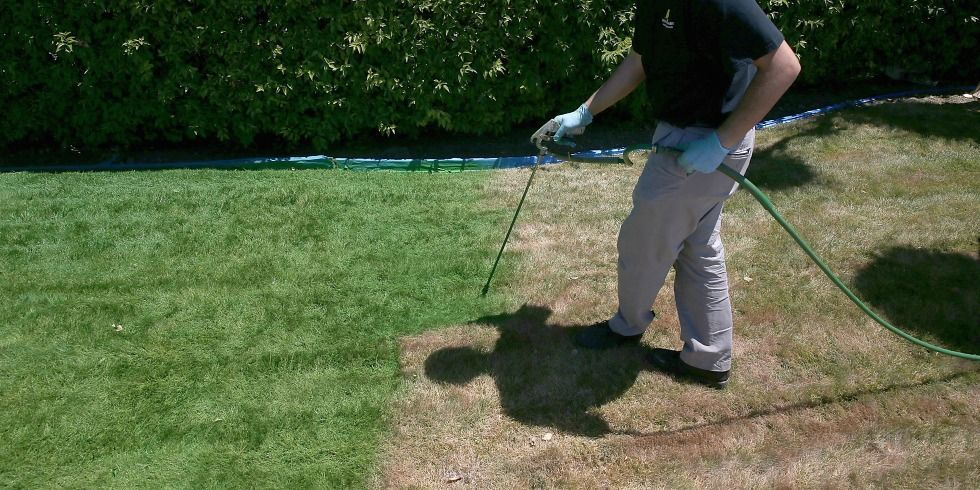 Painting Lawn Green Drought Lawn Care