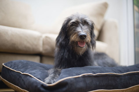 How To Deodorize Dog Bed
