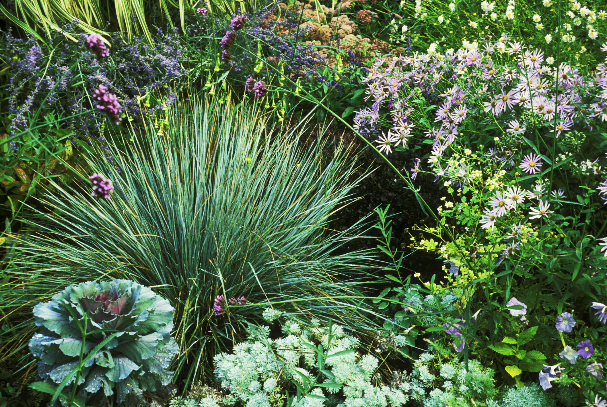 Drought tolerant plants best plants for drought for Drought tolerant trees