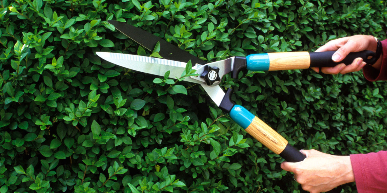 When to prune your garden pruning calendar for plants for Gardening tools pruning