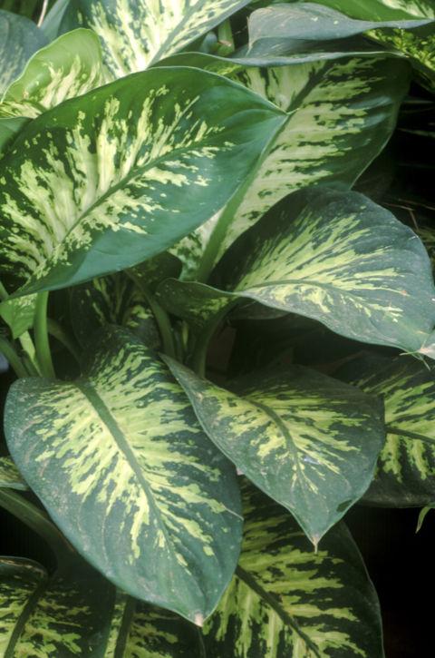 Harmful Plants Plants That Hurt Your Skin