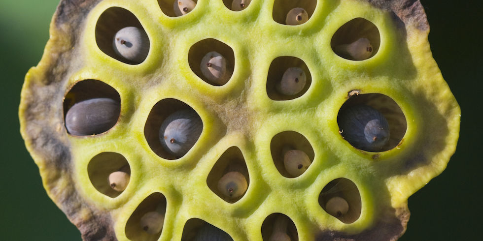 Trypophobia - The Fear Of Holes