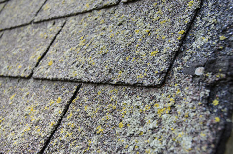 Signs You Need A New Roof When To Replace Your Roof