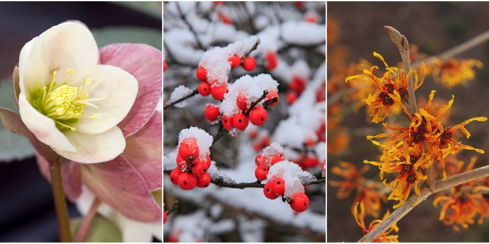 Plants That Bloom In Winter Flowers That Bloom In Cold