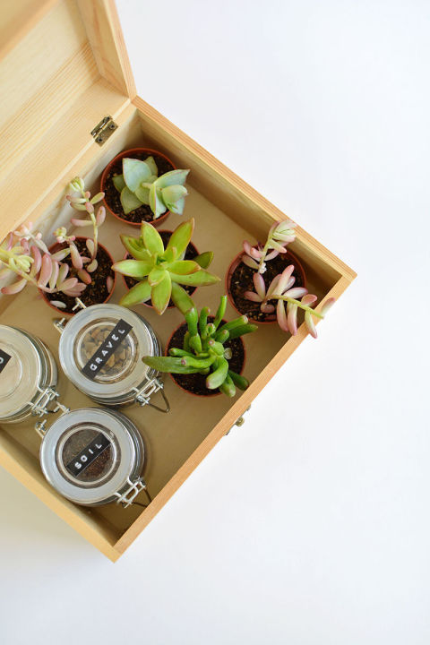 A box filled with budding plants is just the present we'd love to receive. Get the tutorial at Burkatron. »
