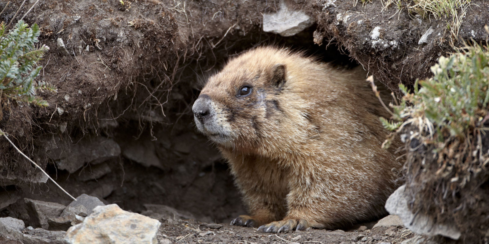 8 Things You Didn't Know About Groundhog Day
