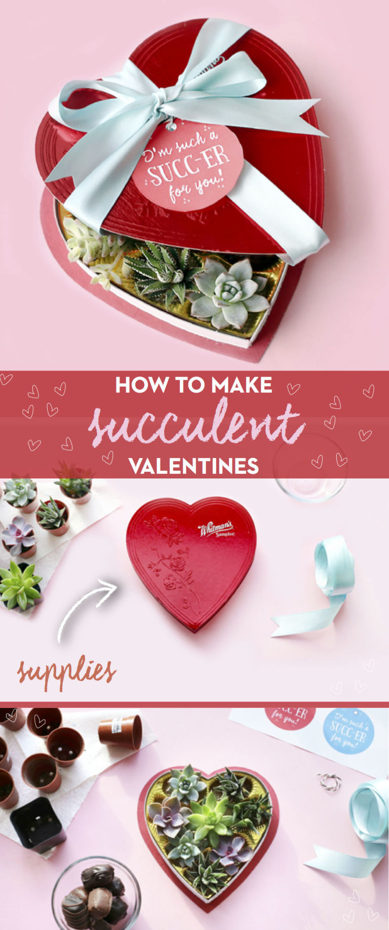 tutorial for making diy valentines using succulents and chocolate boxes - Cute Valentines Day Boxes