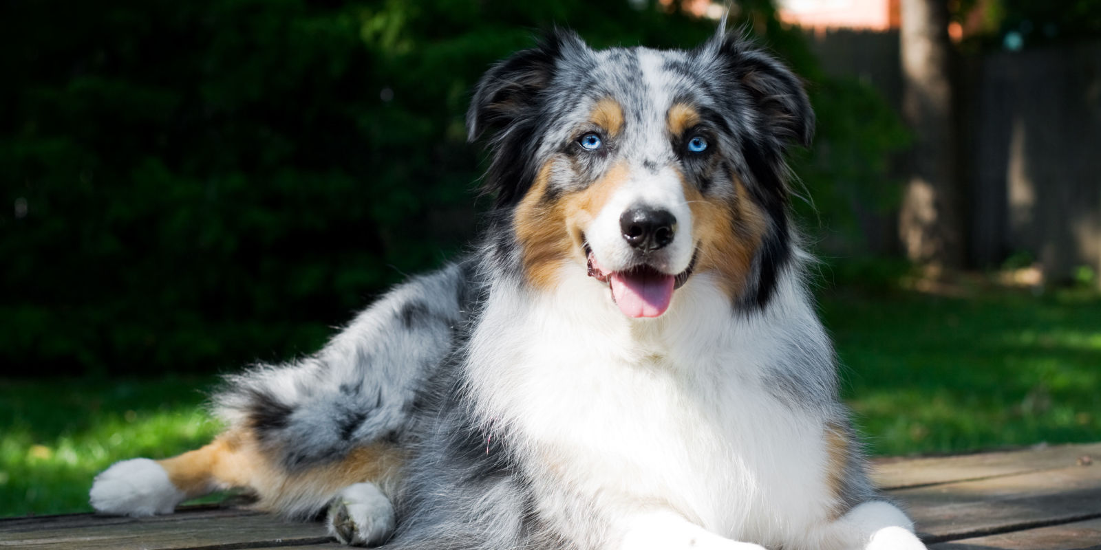 40 Best Medium Sized Dog Breeds List Of Popular Cute