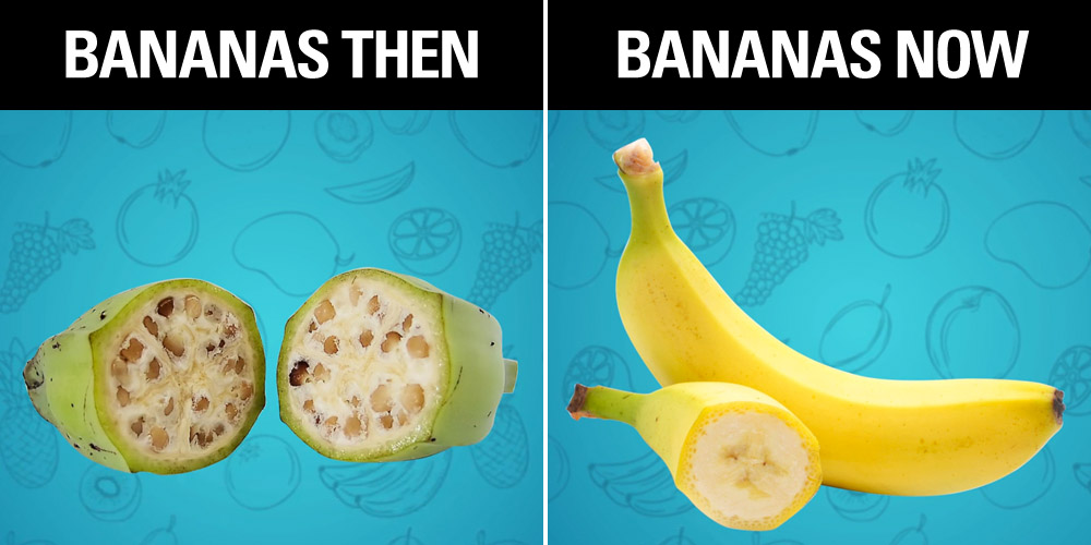 These Pictures Of What Your Favorite Fruits Used To Look