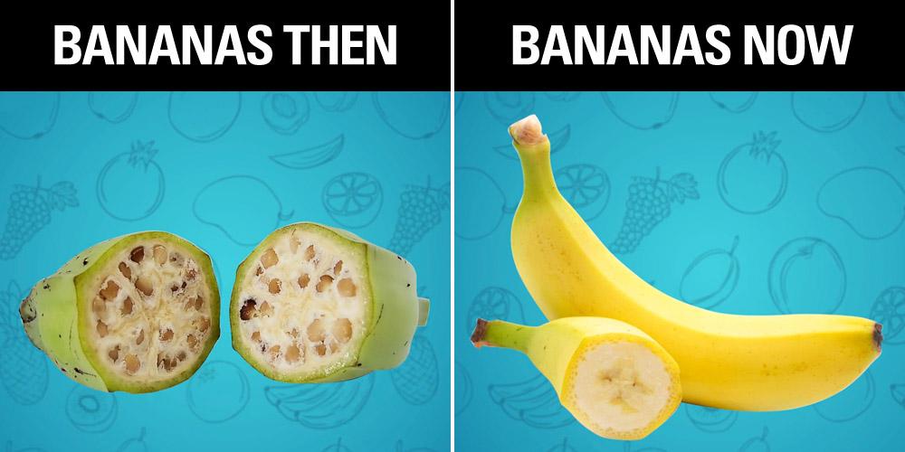 healthy fruit snacks recipes fruit town piru