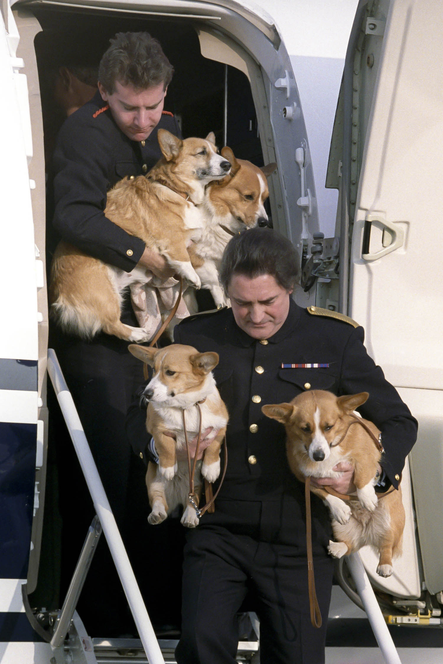 80 years of the queen u0027s royal corgis queen elizabeth u0027s dogs