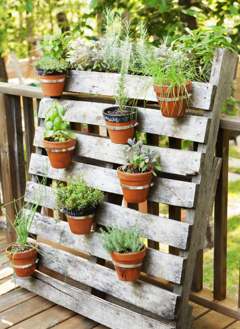 13 container gardening ideas potted plant ideas we love for Easy garden ideas for small spaces