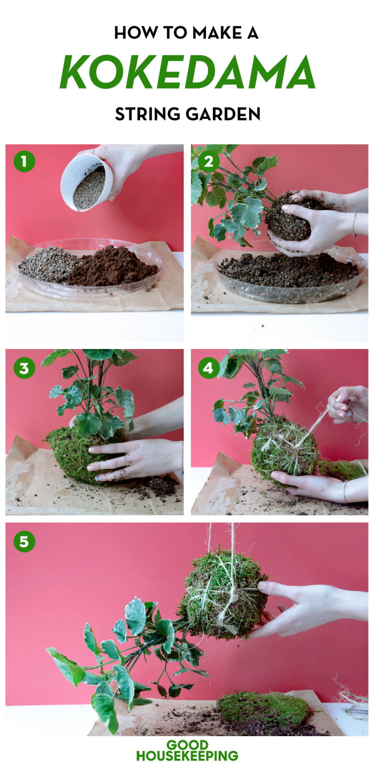 DIY Kokedama Tutorial
