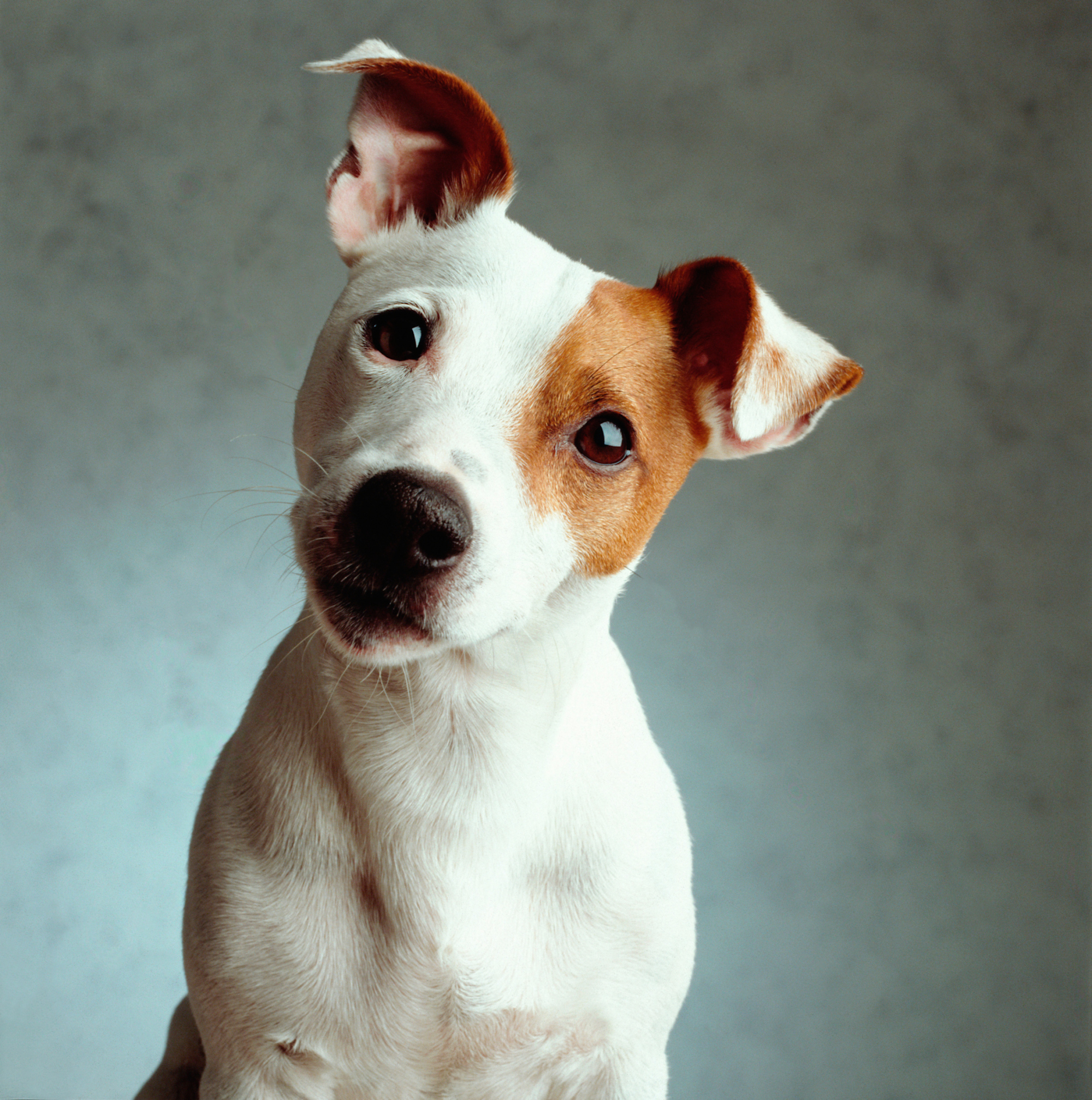 The 20 Most Popular Dog Names 2016 Best Dog Names 2016