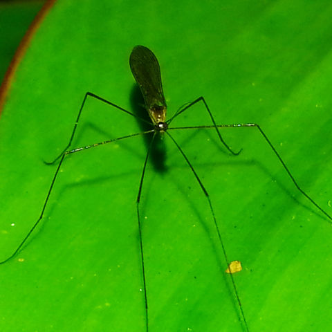 Mosquito repellents that really work