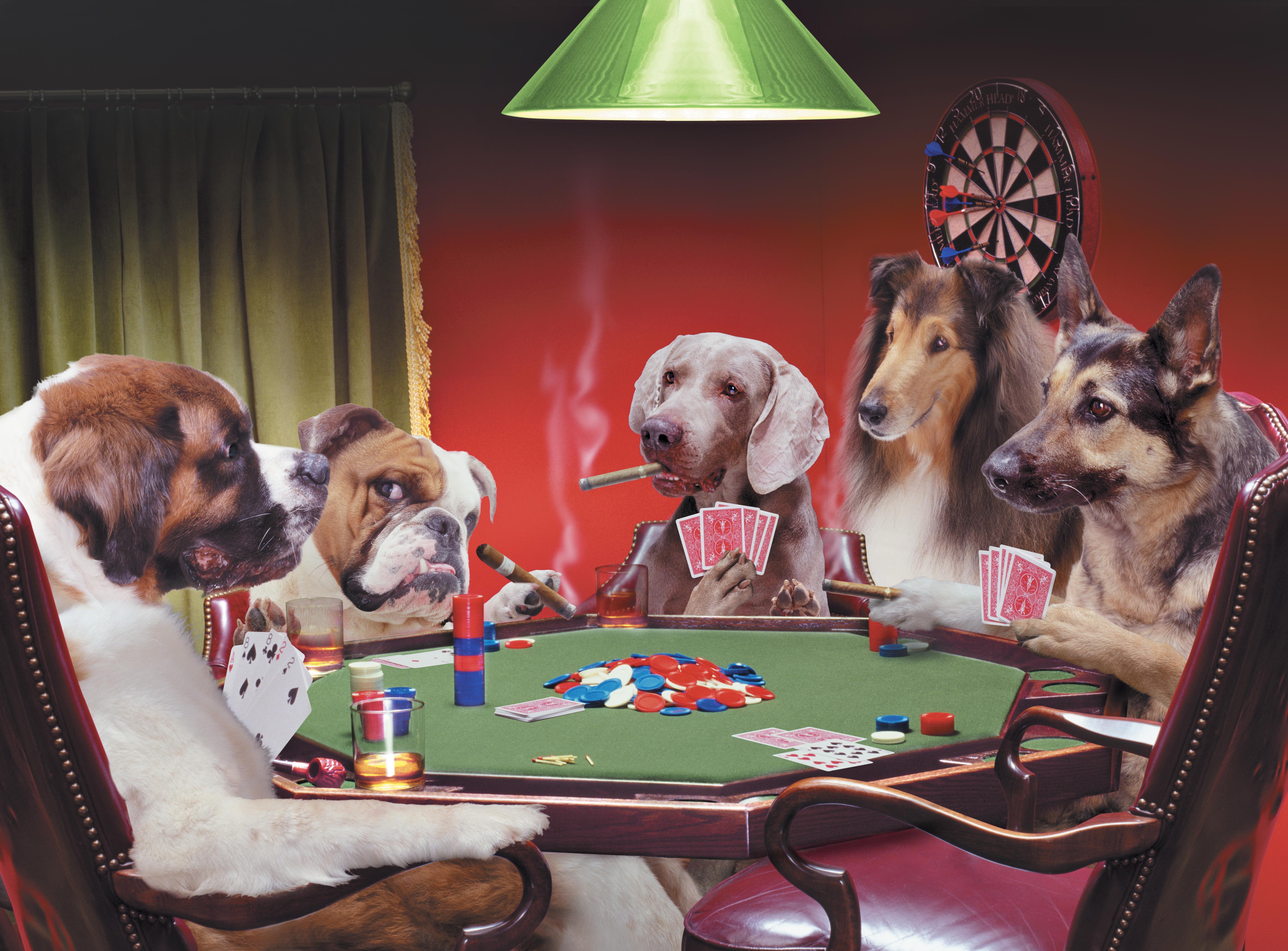 Hunde Poker