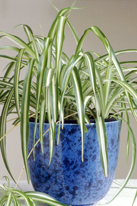 25 Easy Houseplants - Easy To Care For Indoor Plants