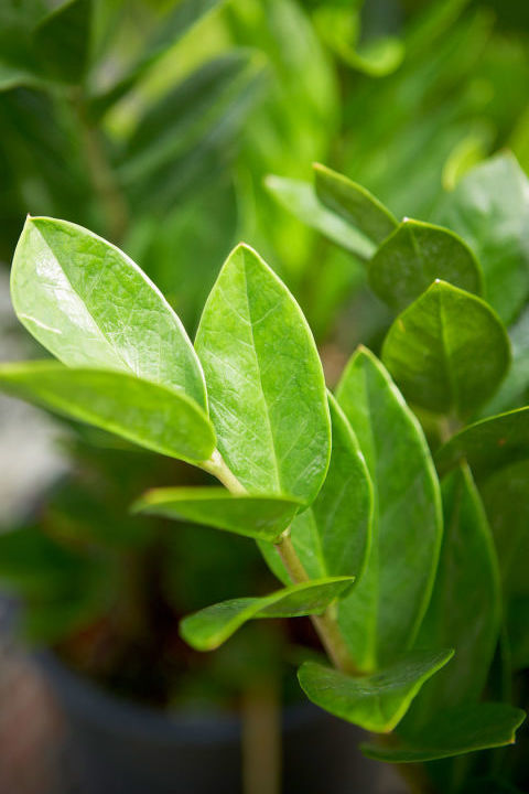 25 Easy Houseplants Easy To Care For Indoor Plants