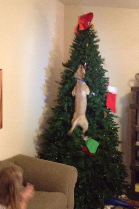 Christmas Tree Fails - Mistakes for Christmas Trees
