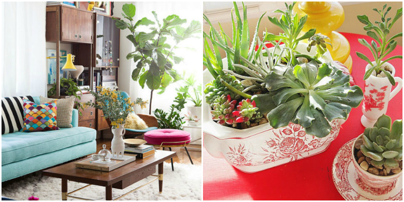 Plants for house decoration