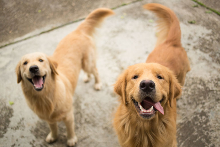 These are the 10 Smartest Dog Breeds - 10 Dog Breeds with the ...