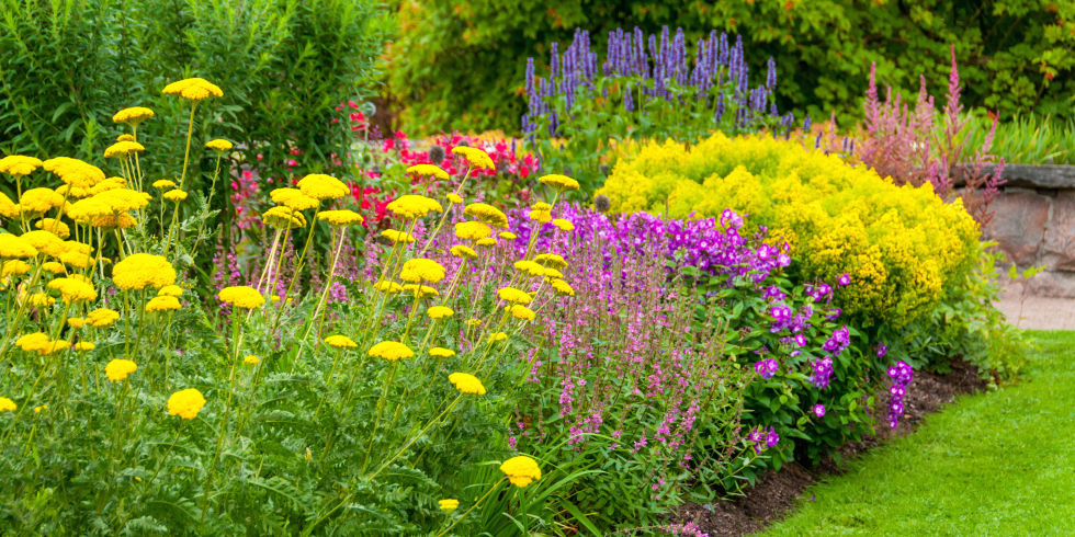 15 Best Summer Flowers Beautiful Flowers That Bloom All Summer