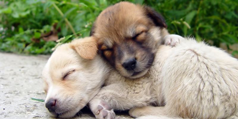Sharing Cute Puppy Photos With Your Hubby Will Save Your