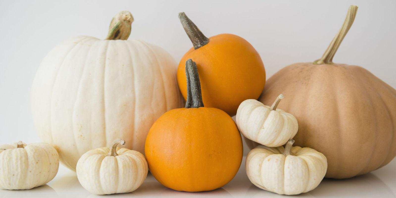 15 Pumpkin Fun Facts Nutrition And Weird Information About Pumpkins