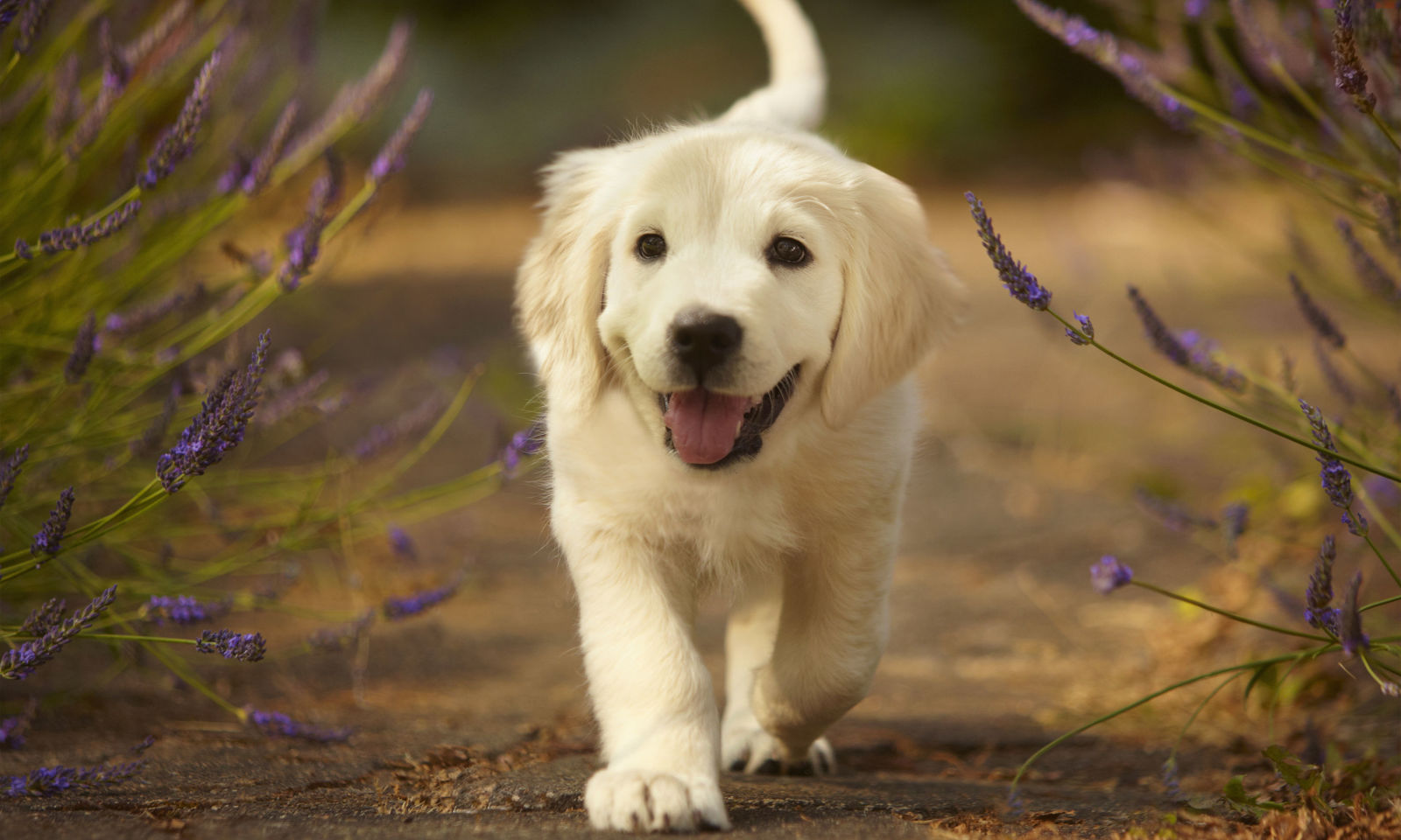 25 Cutest Dog Breeds Most Adorable Dogs
