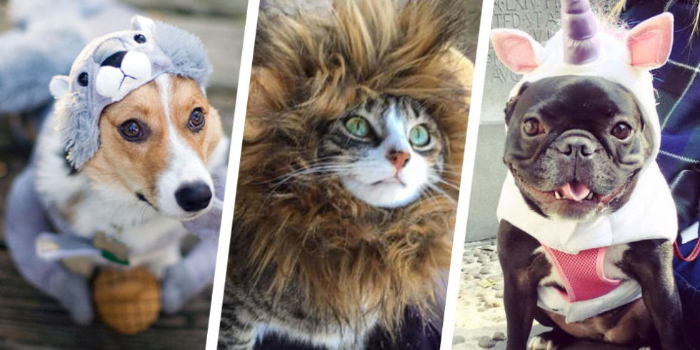 35 Best Dog and Cat Halloween Costumes 2017 - Cute Pet Costume Ideas