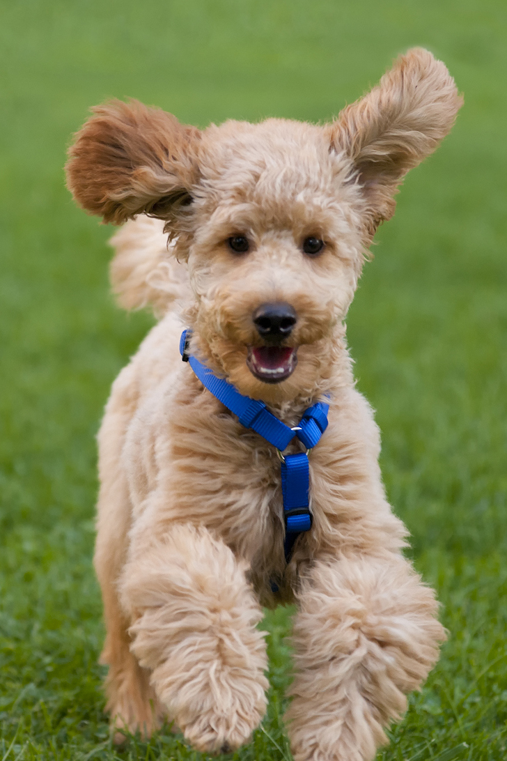 top 25 smartest dog breeds most intelligent dog rankings