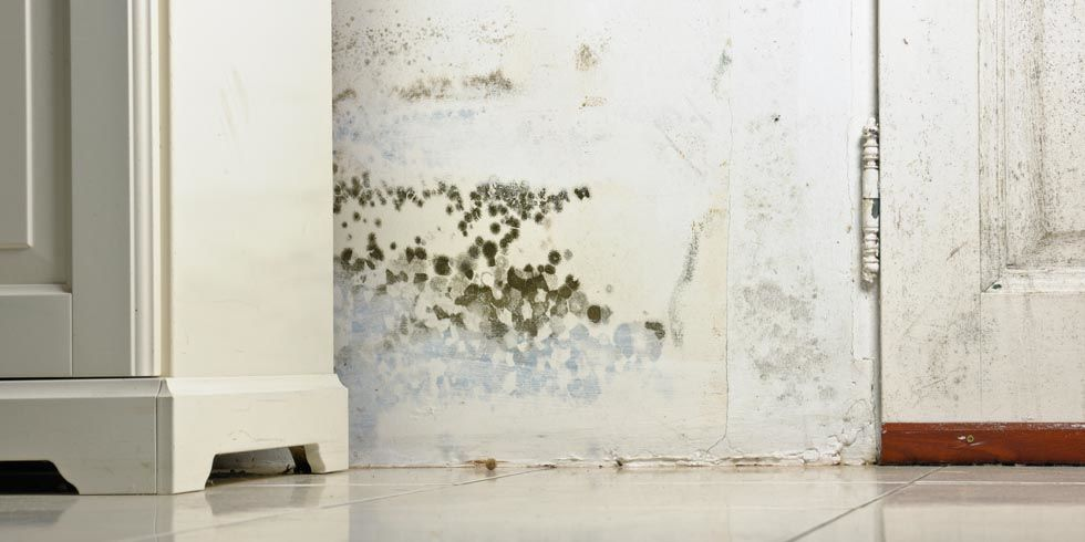Mold and Mildew Removal Tips - How to Get Rid of Mold and Mildew