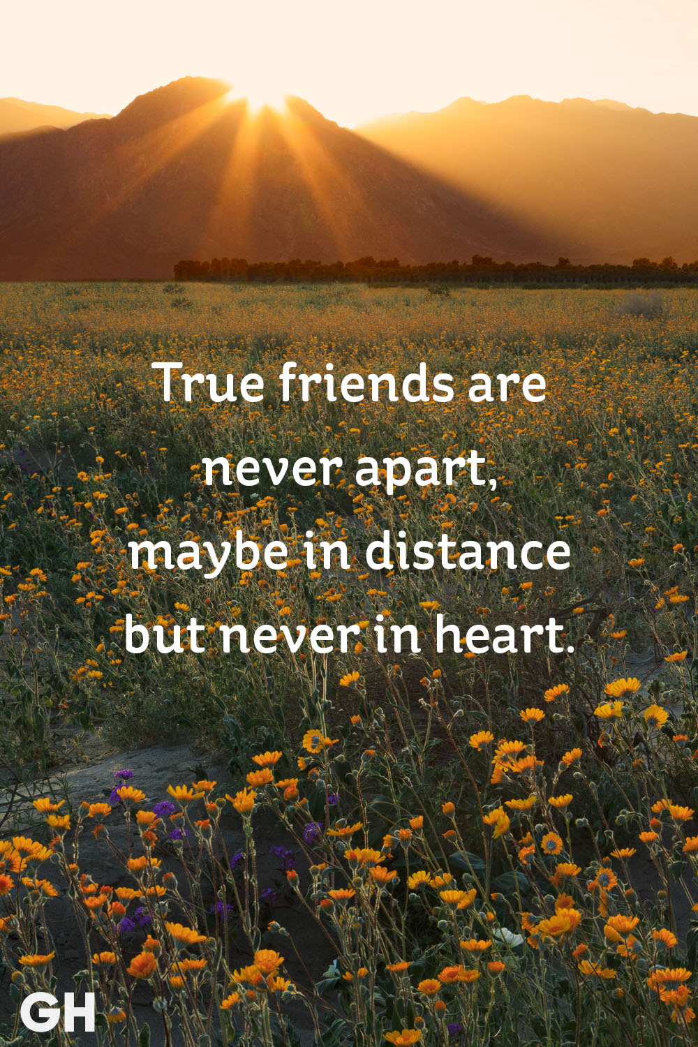 Quotes About Long Distance Friendship 20 Short Friendship Quotes To Share With Your Bff  Cute Sayings