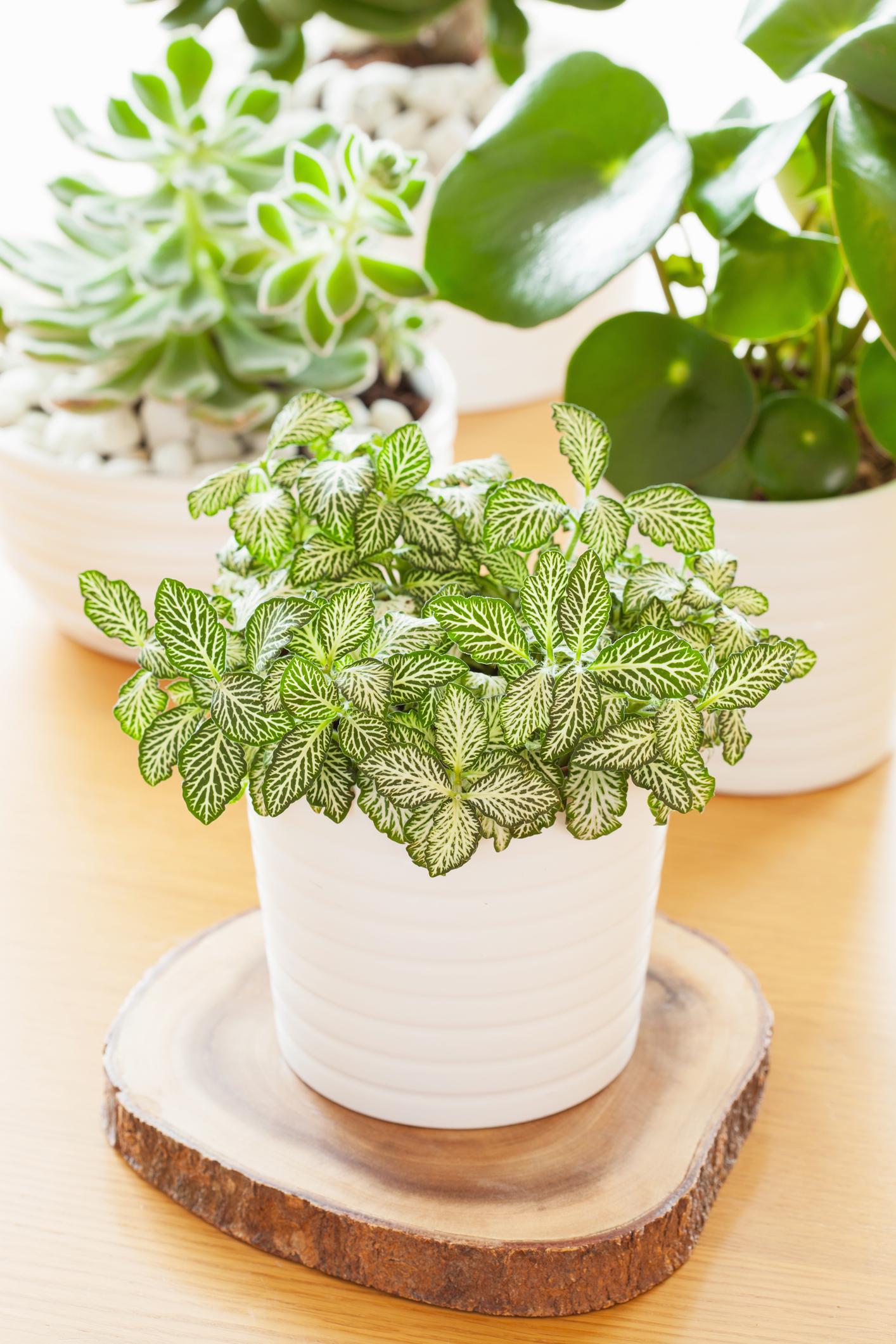 25 easy houseplants easy to care for indoor plants. Black Bedroom Furniture Sets. Home Design Ideas