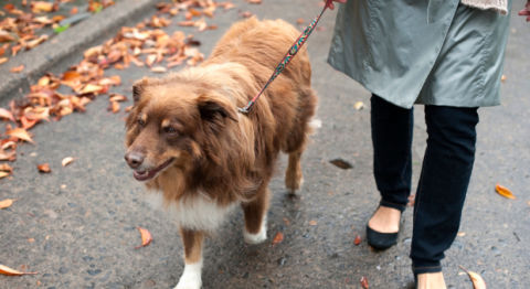 Problems Only Dog Owners Understand Dog Owner Problems