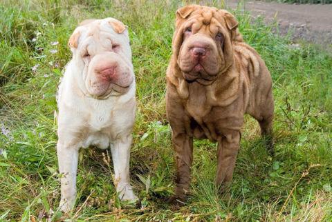 35 Best Medium Sized Dog Breeds List Of Popular Cute