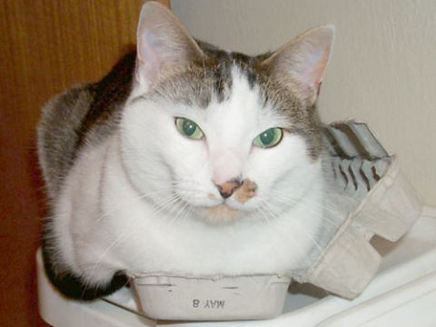 Cats in boxes funny cat photos for Egg carton room