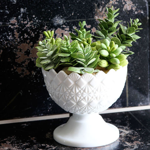 DIY Plant Crafts Plants You Cant Kill
