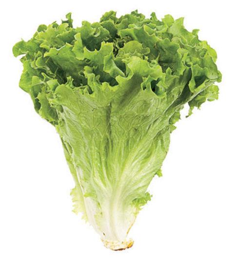 [Image: 54ff047238f22-green-leaf-lettuce-0707-xl.jpg]