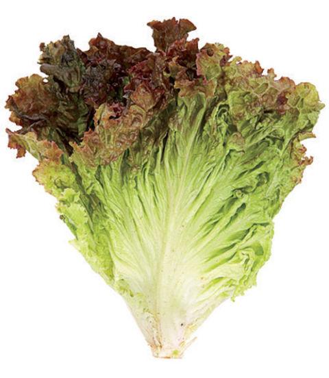 Lettuce Types