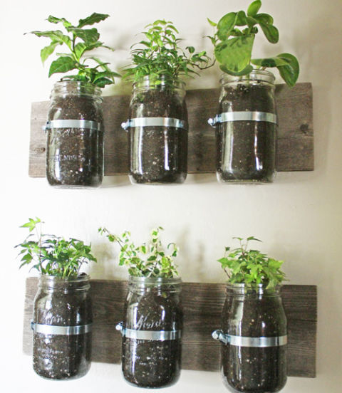 herbs at hand - House Plants Decoration Ideas