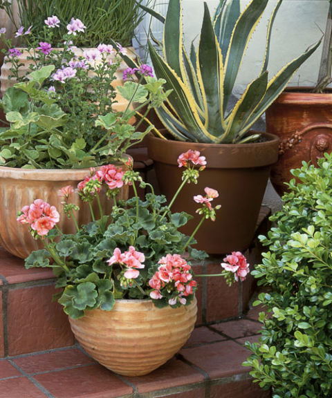 40 small garden ideas small garden designs for Small garden ideas with pots