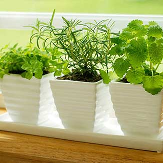 Grow a Winter Herb Garden Easy Indoor Garden