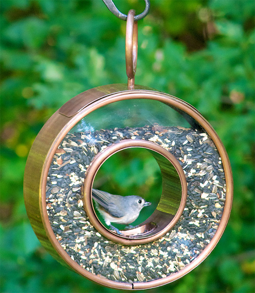 Bird Feeders For Every Backyard - DIY Bird Feeders