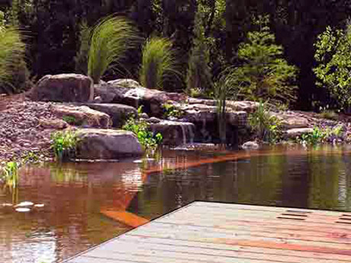 Small Natural Pool Designs lovely pool stretches across just 10 feet design platinum poolcare How Do They Work