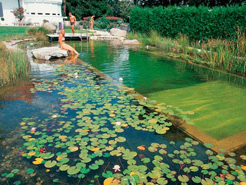 Natural Swimming Pool Designs Amazing Natural Pools  Natural Swimming Pools And Ponds Design Inspiration